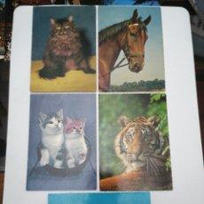 Postales: POSTALES TEMÁTICAS, GATO, LEÓN, TIGRE, CABALLO. Lote 212408291