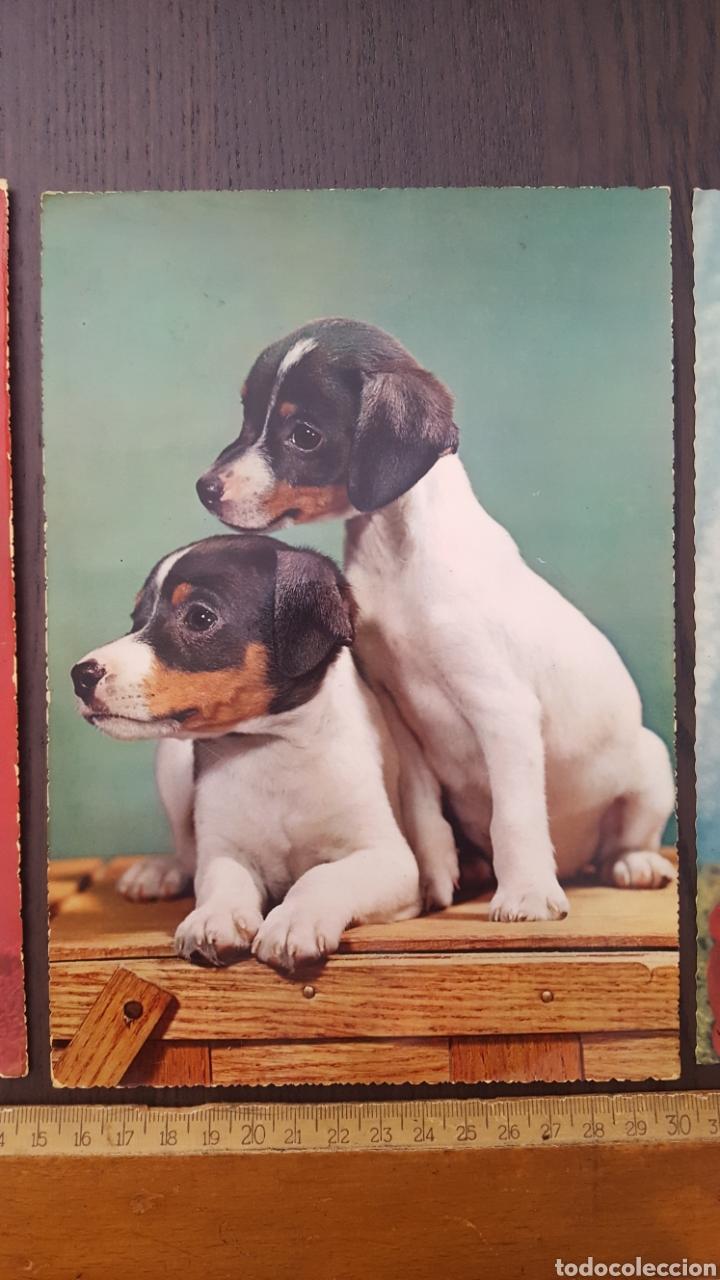 Postales: Lote tres postales antiguas de perros y gatos - Gran tamaño - 14,5 x 21 cm - Foto 3 - 213395821