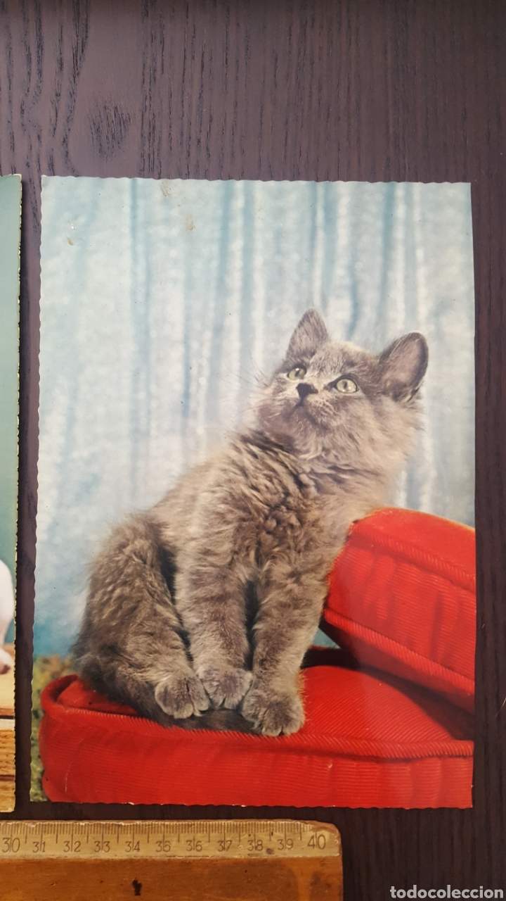 Postales: Lote tres postales antiguas de perros y gatos - Gran tamaño - 14,5 x 21 cm - Foto 4 - 213395821