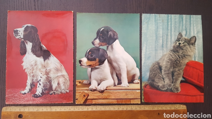 LOTE TRES POSTALES ANTIGUAS DE PERROS Y GATOS - GRAN TAMAÑO - 14,5 X 21 CM (Postales - Postales Temáticas - Animales)