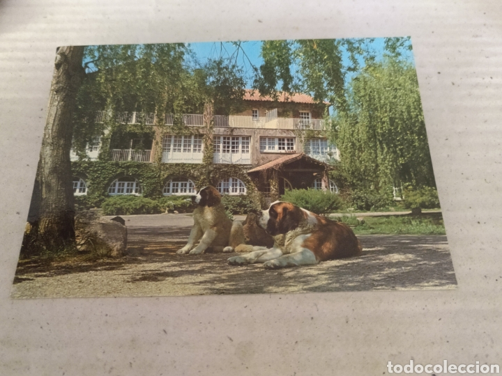 SAN BERNAT EN MONTSENY A 70 KILÓMETROS DE BARCELONA 1982. SIN CIRCULAR (Postales - Postales Temáticas - Animales)