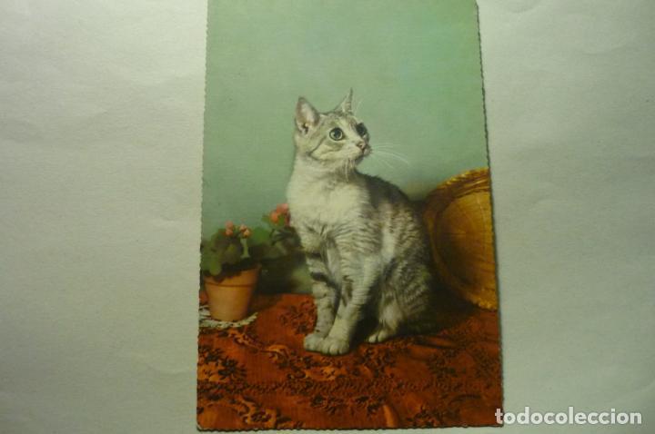 POSTAL EXTRANJERA GATO CM (Postales - Postales Temáticas - Animales)