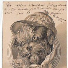 Postales: CURIOSA POSTAL CON RELIEVE. PERRO CON GORRA Y FLOR. SIN DIVIDIR ESCRITA 1900-10 PT. Lote 215625863