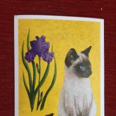 Postales: R10260 POSTAL FOTO ANIMAL GATO CON FLOR # S907 MARSKATT SUECIA. Lote 217685836
