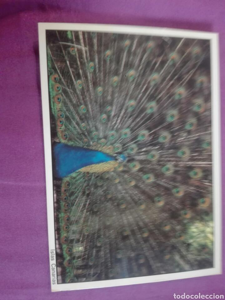 94 PAVO REAL EDDI FOTO ALBERTO FARES (Postales - Postales Temáticas - Animales)