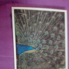 Postales: 94 PAVO REAL EDDI FOTO ALBERTO FARES. Lote 217735783