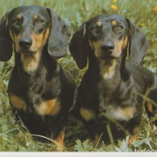 Postales: POSTAL ANIMALES, PERROS DACHSHUNDS – PRINTED IN GERMANY 3915 – S/C. Lote 217882132