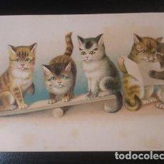 Postales: PRECIOSA POSTAL DE GATOS - PORTAL DEL COL·LECCIONISTA. Lote 217990062