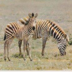 Postales: FAUNA AFRICANA, ZEBRAS - EDITIONS HOA-QUI Nº4291 - S/C. Lote 218111756