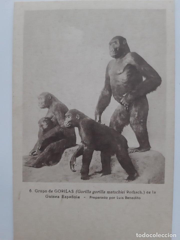 Postales: ANTIGUAS 9 POSTALES TEMATICA DE ANIMALES - Foto 2 - 219015578