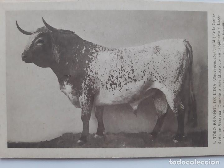 Postales: ANTIGUAS 9 POSTALES TEMATICA DE ANIMALES - Foto 4 - 219015578