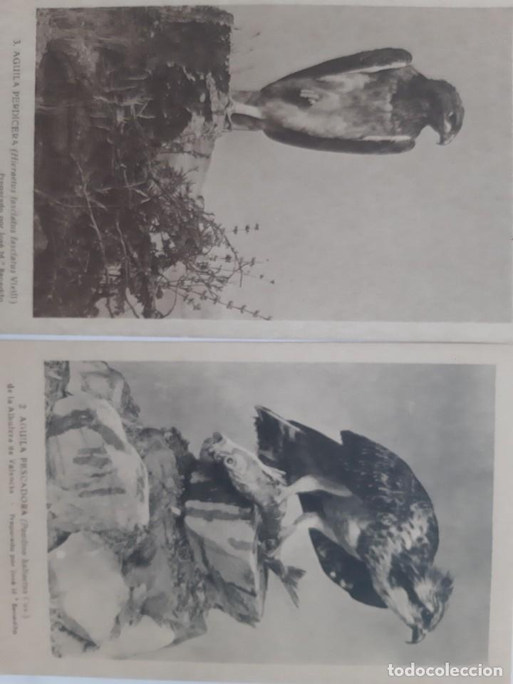 Postales: ANTIGUAS 9 POSTALES TEMATICA DE ANIMALES - Foto 5 - 219015578