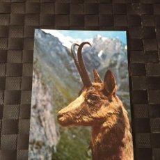 Postales: POSTAL DE ANIMALES - REBECO - LA DE LA FOTO VER TODAS MIS POSTALES. Lote 219037302