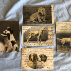 Postales: 5 TARJETAS POSTALES ANTIGUAS DE ANIMALES. Lote 219981000