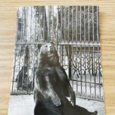 Postales: POSTAL EN BLANCO Y NEGRO. OSO. LIGERAMENTE TROQUELADA EN LOS BORDES. REAL PHOTO.. Lote 219982367