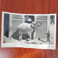 Postales: TARJETA POSTAL. EN BLANCO Y NEGRO. ELEFANTE Y CUIDADOR. EDICIONES ADOLFO ZERKOWITZ. FOTO BARCELONA.. Lote 220241812