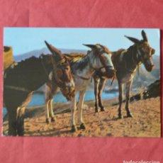 Postales: BORRICOS TIPICOS - TARJETA POSTAL. Lote 220594485