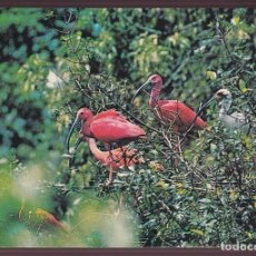 Postales: VENEZUELA. *EUDOCIMUS RUBER* CIRCULADA 1973.. Lote 221657961