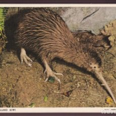 Postales: NEW ZEALAND. *KIWI* NUEVA.. Lote 221697987