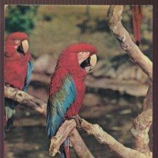 Postales: BARCELONA. ZOO. *GUACAMAYO ROJO Y VERDE - ARA CHLOROPTERUS* NUEVA.. Lote 221703236