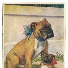 Postales: PAREJA DE BULLDOG INGLES -POSTAL GRANDE -. Lote 221703843