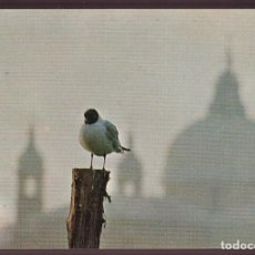 Postales: VENEZIA. *VISIONE ALL´ALBA* NUEVA.. Lote 221704535