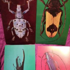 Postales: INSECTOS. Lote 221848936