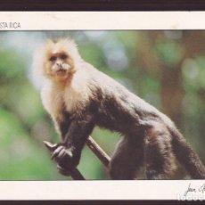Postales: COSTA RICA. *MONO: CARA BLANCA* FOTO *JEAN MERCIER* ESCRITA.. Lote 222163515