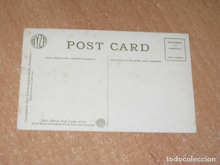 Postales: POSTAL DE GREVEY ZEBRA - Foto 2 - 222469088