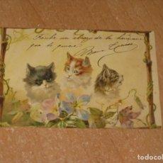 Postales: POSTAL DE GATOS. Lote 222887905