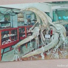Postales: POSTAL 2887 NUEVA MANIPEL AQUARIUM SAN SEBASTIAN MUSEO OCEANOGRAFICO BALLENA FAUNA. Lote 228362205