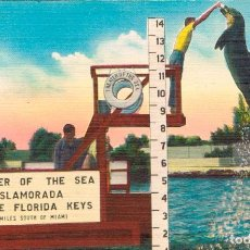 Postales: ESPECTACULO CON DELFIN EN ISLAMORADA (FLORIDA KEYS). Lote 228484590