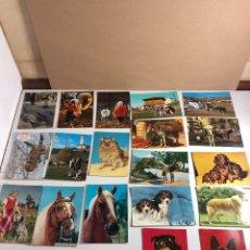 Postales: POSTAL,20 POSTALES DE ANIMALES SIN ESCRIBIR. Lote 233515070