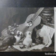 Postales: GATOS MUSICOS POSTAL. Lote 236122700