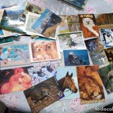 Postales: 90 POSTALES * ANIMALES * ( LOTE Nº 120 ). Lote 241977475