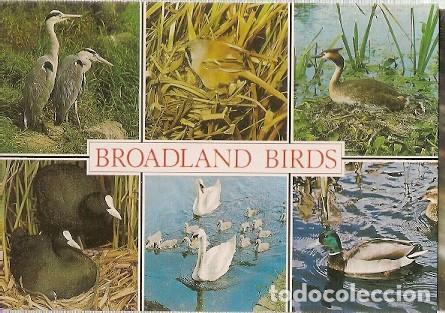 GRAN BRETANA & CIRCULADO, AVES DE BROADLAND, NORWICH A SKIPTON 2006 (6876) (Postales - Postales Temáticas - Animales)
