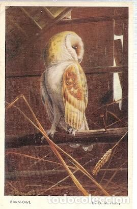 GRAN BRETANA & CIRCULADO, LECHUZA, TYTO ALBA, SERIE D.M. HENRY, TONBRIDGE A MAIDSTONE 1960 (5419) (Postales - Postales Temáticas - Animales)