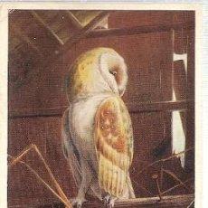 Postales: GRAN BRETANA & CIRCULADO, LECHUZA, TYTO ALBA, SERIE D.M. HENRY, TONBRIDGE A MAIDSTONE 1960 (5419). Lote 243096455