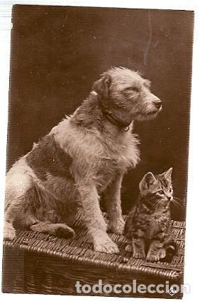 GRAN BRETANA & CIRCULADO, MASCOTAS, EDMONTON 1917 (86886) (Postales - Postales Temáticas - Animales)