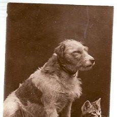 Postales: GRAN BRETANA & CIRCULADO, MASCOTAS, EDMONTON 1917 (86886). Lote 243099790