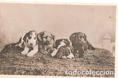 GRAN BRETANA & CIRCULADO, NUESTRAS MASCOTAS, DAVIDSON BROS, WINGHAM TO SUNBURY 1905 (6055) (Postales - Postales Temáticas - Animales)