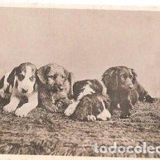 Postales: GRAN BRETANA & CIRCULADO, NUESTRAS MASCOTAS, DAVIDSON BROS, WINGHAM TO SUNBURY 1905 (6055). Lote 243100200