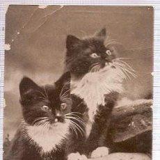 Postales: GRAN BRETANA & CIRCULADO, GATOS, RIPON 1915 (6055). Lote 243100285