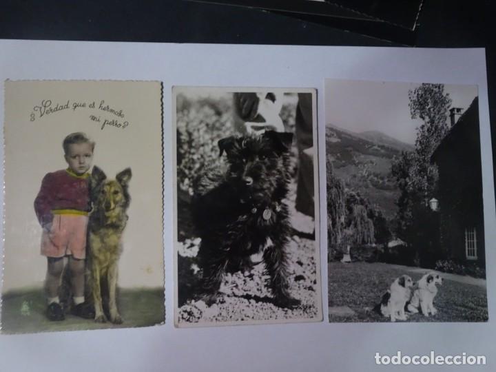 LOTE DE 3 ANTIGUAS POSTALES CPSM, PERROS, VER FOTOS (Postales - Postales Temáticas - Animales)