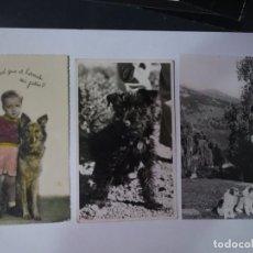 Postales: LOTE DE 3 ANTIGUAS POSTALES CPSM, PERROS, VER FOTOS. Lote 243627775