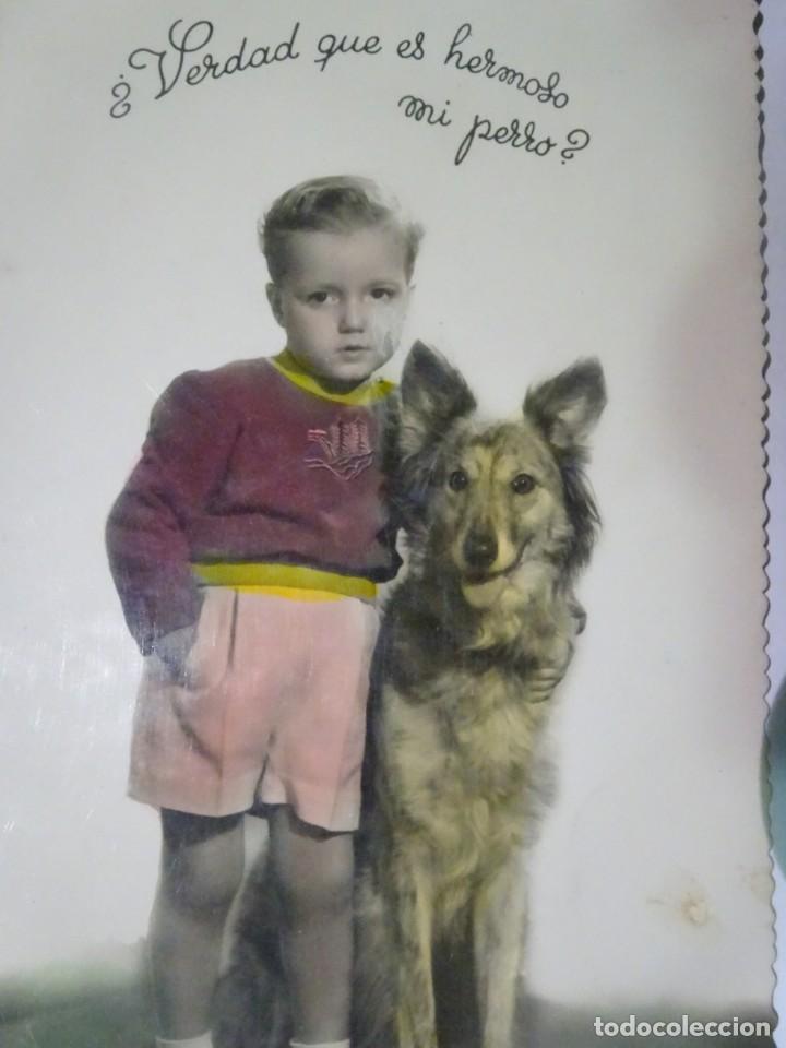 Postales: LOTE DE 3 ANTIGUAS POSTALES CPSM, PERROS, VER FOTOS - Foto 4 - 243627775