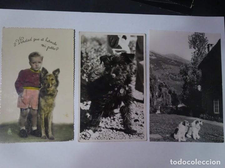 Postales: LOTE DE 3 ANTIGUAS POSTALES CPSM, PERROS, VER FOTOS - Foto 9 - 243627775