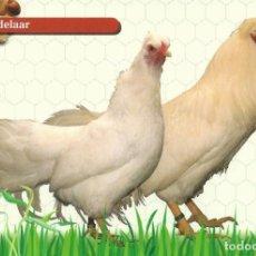 Postales: TARJETA POSTAL. ESCRITA AL DORSO. CIRCULADA BAJO SOBRE. GALLINAS. AVES DE CORRAL. ANIMALES.. Lote 244549340