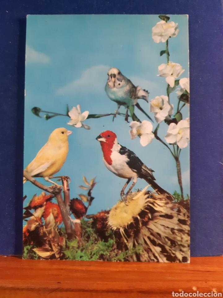ANTIGUA POSTAL DE PÁJAROS AÑOS 60 (Postales - Postales Temáticas - Animales)