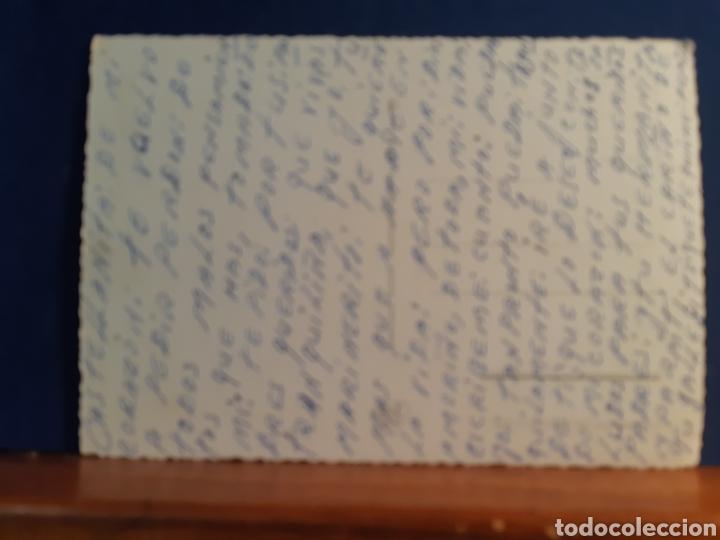 Postales: Antigua postal de unos gatos años 60 - Foto 2 - 244581940